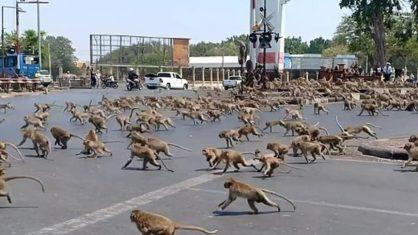 Coronavírus espanta turistas e macacos invadem as ruas atrás de comida na Tailândia